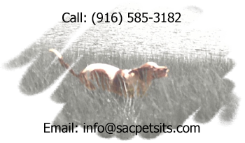sacramento ca pet sitting dog walking cat sitting dog sitting